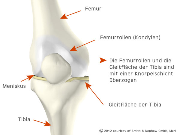 Das gesunde Knie - copyright: smith & nephew